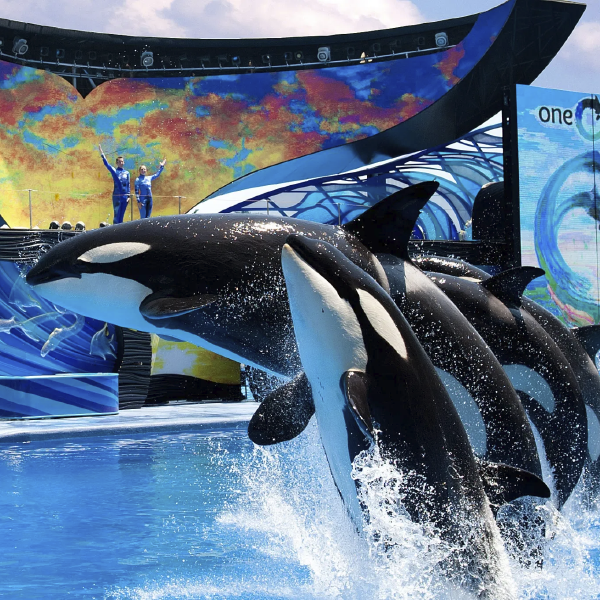 SeaWorld_Celetours