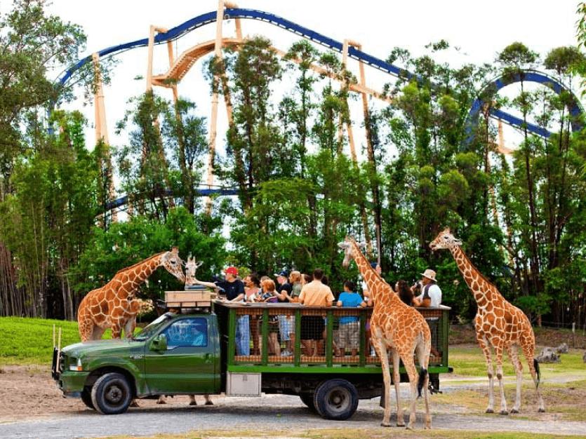 Safari - Busch Garden