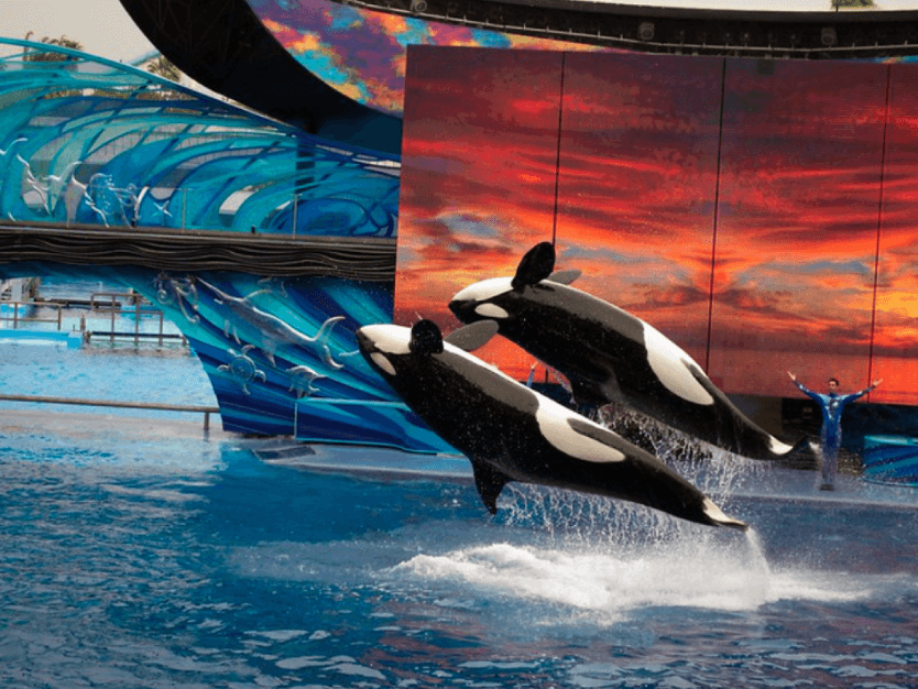 Show de Ballenas - Sea World