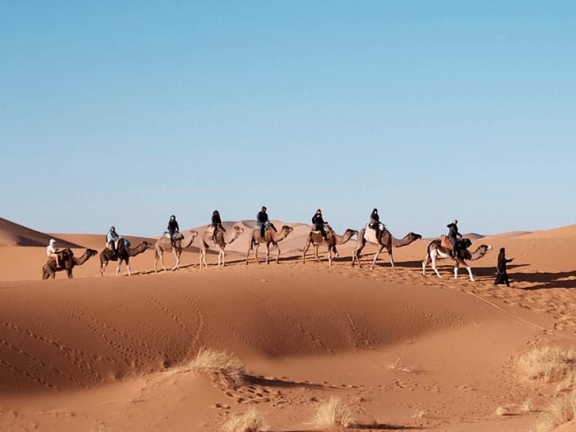 Safari en el Desierto