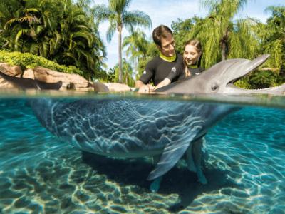 Nadando con Delfines en St Agustine